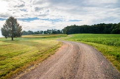 Rural Curvy Street Landscape with Grass and Trees on Farm stock photos