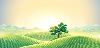 Rural dawn landscape with lonely tree. Rural dawn landscape with sown fields and a lonely tree and mountains background. Raster illustration stock illustration