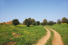 The rural dirt road Stock Photos