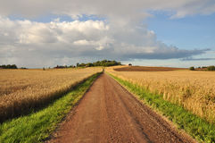 Rural dirt road Royalty Free Stock Image