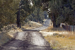 Rural Dirt Road In Afternoon Light Royalty Free Stock Photos