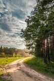 rural dirt road along the forest under a dramatic cloudy sky is illuminated by the setting sun Stock Photography