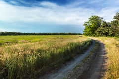 The rural dirt road Royalty Free Stock Photo