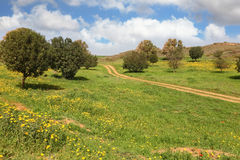 The rural dirt road, field and trees Stock Images