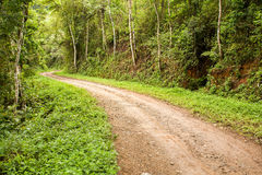 Rural dirt road. In the forest Stock Images