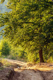 Rural dirt road through forest. Rural dirt road through a forest at sunset Royalty Free Stock Photos