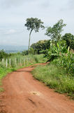 Rural dirt road and green meadow in rural villages Royalty Free Stock Photo