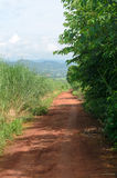 Rural dirt road and green meadow in rural villages Stock Photos