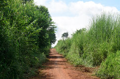 Rural dirt road and green meadow in rural villages Stock Photography