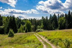 Rural dirt road leading to the coniferous forest. Zhukovskiy district, Kaluzhskiy region, Russia royalty free stock image