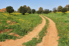The rural dirt road passes fields Stock Image