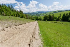 Rural dirt road to green spruce forest. Beautiful countryside landscape Royalty Free Stock Photography