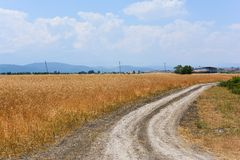 Rural dirt road among wheat fields Royalty Free Stock Images