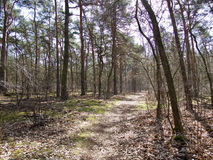 Rural dirt track through sparse woodland or forest. Rural dirt track littered with old brown autumn leaves leading through sparse woodland or forest receding Royalty Free Stock Photo