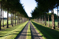 Rural Drive. Image of rural driveway taken in the early morning with deep shadows royalty free stock image