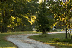 Rural driveway. Morning sun creating backlit trees in the rural driveway.  This is in Western Tennessee Stock Photos