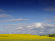 Rural English Landscape. Looking over a rural English landscape of yellow rapeseed, to a gently curving horizon, beneath a dramatic blue sky with fluffy white stock photography