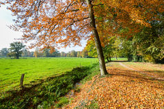 Rural fall landscape with colored leaves and green meadow Royalty Free Stock Images