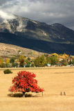Rural Fall Tree. A bright red tree in the middle of a valley Royalty Free Stock Images