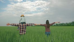 Rural family, happy father with kid boy on shoulders and mum walk in green wheat field. Against sky stock video footage