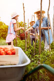 Rural family working in garden Royalty Free Stock Photos