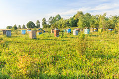 Rural farm apiary with multicolor beehouses Royalty Free Stock Images