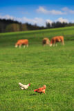 Rural farm Royalty Free Stock Photos