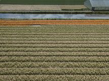 Rural farm fields with natural food growing in Netherlands. Aerial landscape of green rural fields in Netherlands.Beautiful landscape of agricultural field on royalty free stock photo