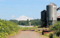 Rural Farm Land and Mount Baker Royalty Free Stock Photo