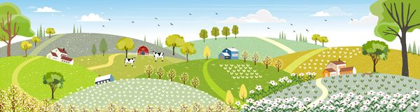 Rural farm landscape with green fields, farm house, barn, animals cow, blue sky and clouds,  Vector cartoon Spring or Summer