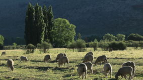 Rural farm landscape stock footage