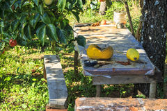 Rural Farm. Makeshift wooden table under the beautiful persimmon. Green leaves. Dead nature on the table. Sun and shade Stock Image