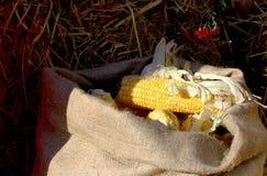 Rural farm natural organic autumn maize corn on sack Stock Photo