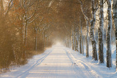 Rural farm road in winter Royalty Free Stock Image