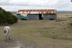 Rural farm shed and horse Stock Photo