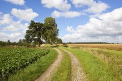 Farm track and poplar trees Royalty Free Stock Photo