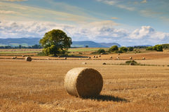 Rural farming landscape. Countryside landscape with golden hay and trees Royalty Free Stock Photos
