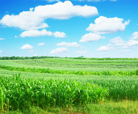Rural farmland Stock Images