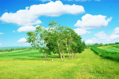 Rural farmland Stock Photo