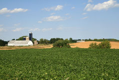 Rural farmland scenic. Pea crops and other crops visible in this Wisconsin farmland scenic Royalty Free Stock Photography