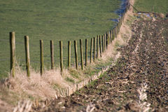 Rural fence. A rural fence separates a grassland form a field Stock Photo