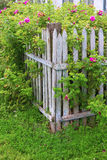 Rural fence Royalty Free Stock Photo