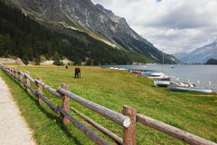Rural fence and sleek bay horse Stock Photography