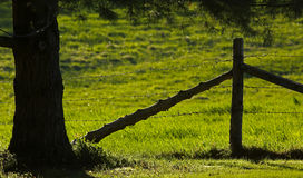 Rural Fence Tree Backlit Evening Sun Stock Photo