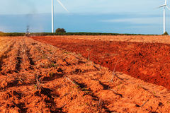 Rural field with the blue sky. Royalty Free Stock Image