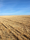 Rural field with bright blue sky background. Background rural landscape in a sunny morning summer day Royalty Free Stock Images