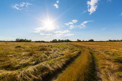 Rural field and country road, under bright sun light Stock Photography