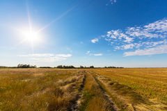 Rural field and country road, under bright sun light Royalty Free Stock Photography