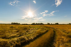 Rural field and country road, under bright sun light Royalty Free Stock Photos