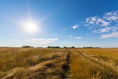 Rural field and country road, under bright sun light Stock Photos